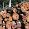¿Por qué es tan importante la madera aunque no la negocie?