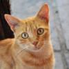 En ocasiones veo gatos… pero vivitos y coleando