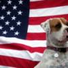 Dogs of the Dow y Perros del Ibex para 2015: estrategia