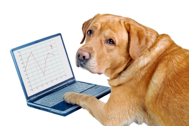 dog work on notebook